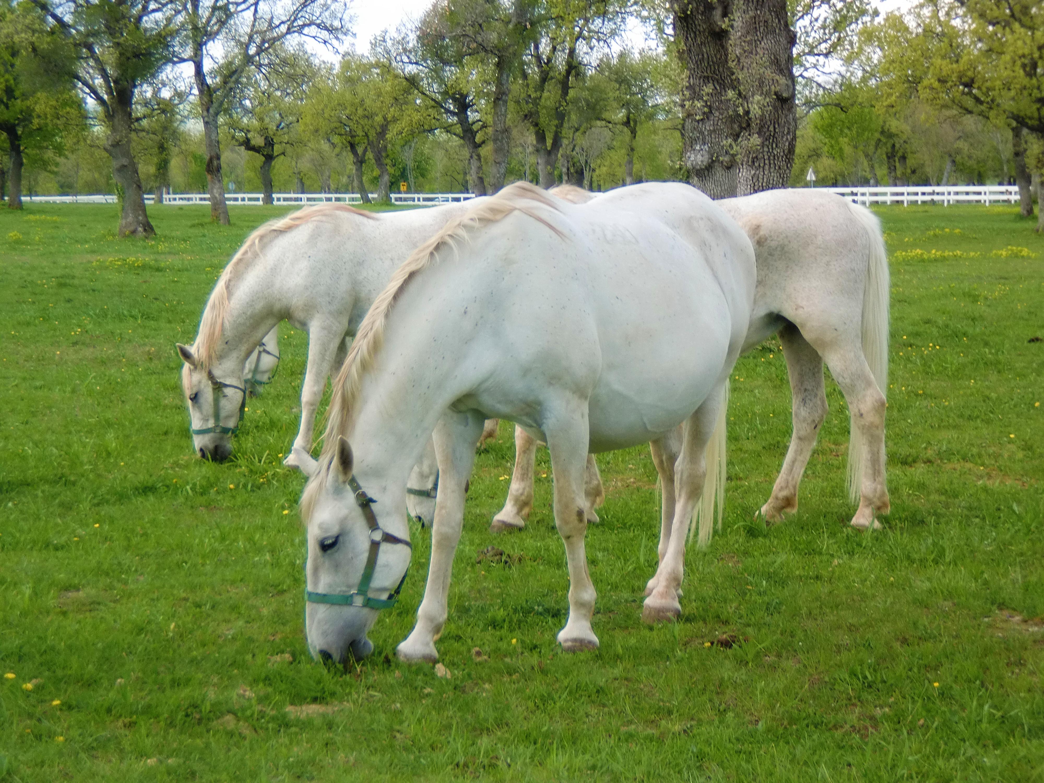 White Horses wallpaper | 1920x1080 | #59226 | 3000x4000