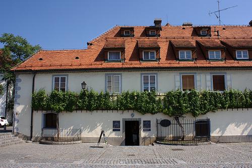 Oldest vine in the world, Maribor, Slovenia