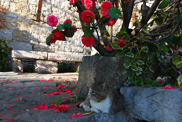 Cat with flowers in Gornja Lastva, Montenegro