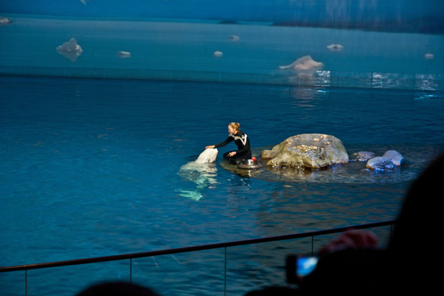 Aquatic Show at Shedd Aquarium Chicago