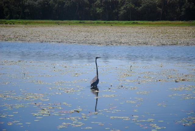 Bird spotting on an airboat tour of Myakka River State Park, Florida