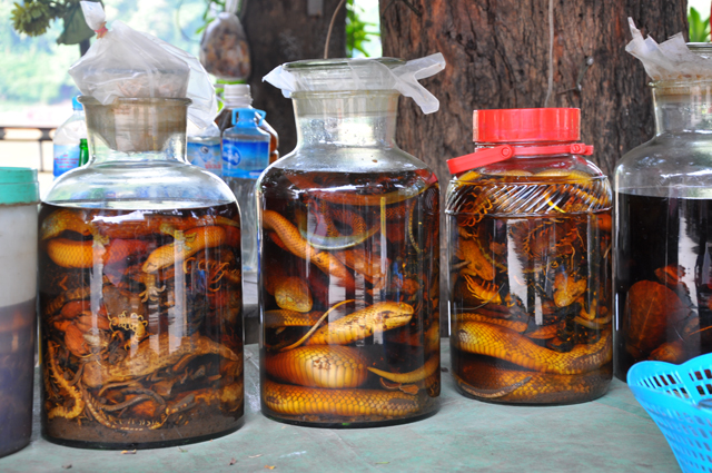 Laos Snake Whisky in Luang Prabang