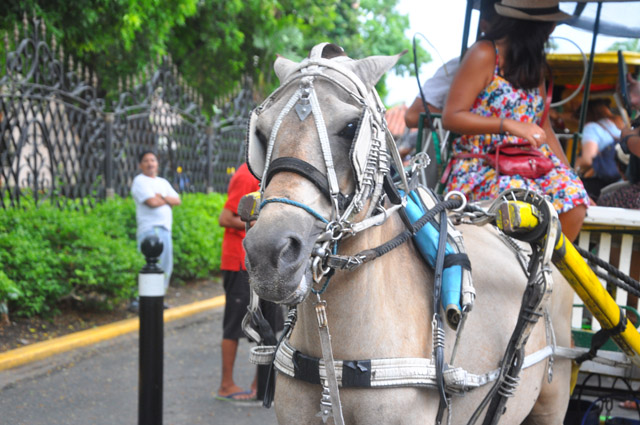 Horse Drawn Carriage Intramuros