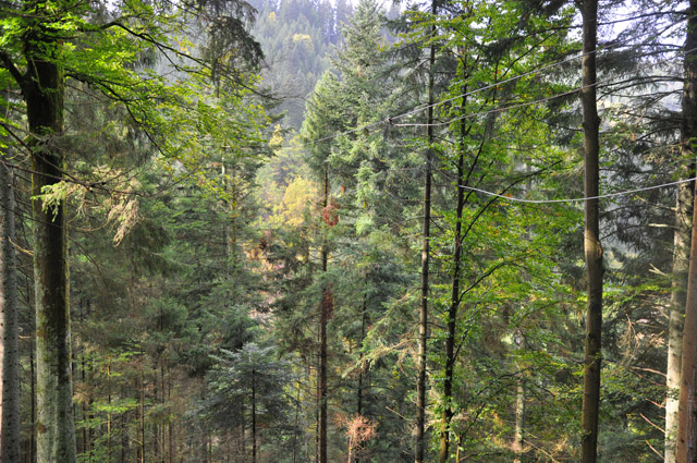 Ziplines Black Forest