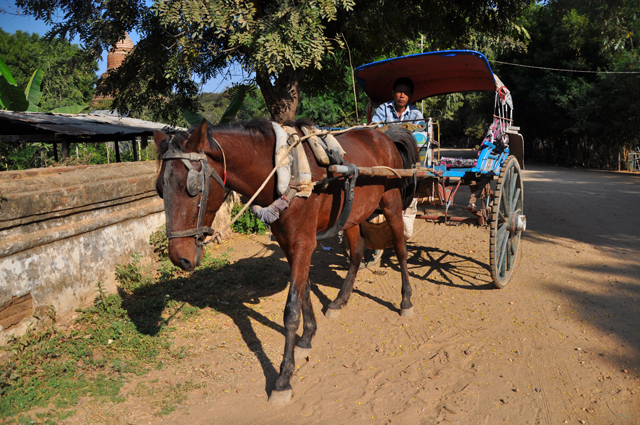 Horse and Cart Bagan