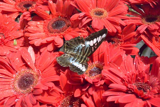 Singapore Airport Butterfly Garden