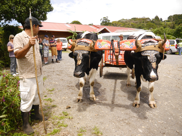 Costa Rica Oxcart