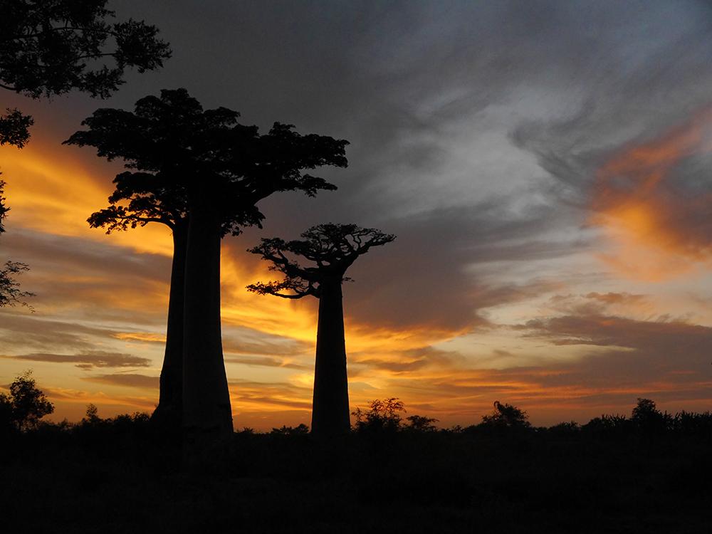 Baobab Sunset Madagascar