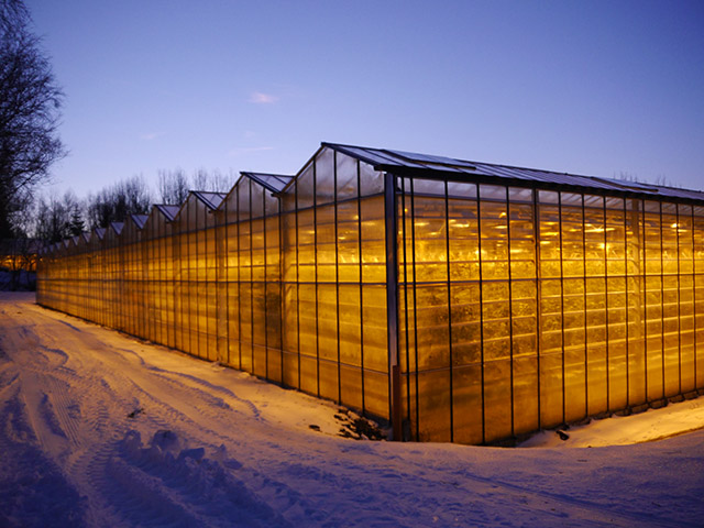 Greenhouse in The Golden Circle, Iceland