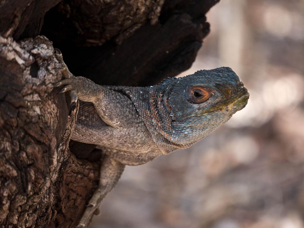 Kirindy Reserve Madagascar