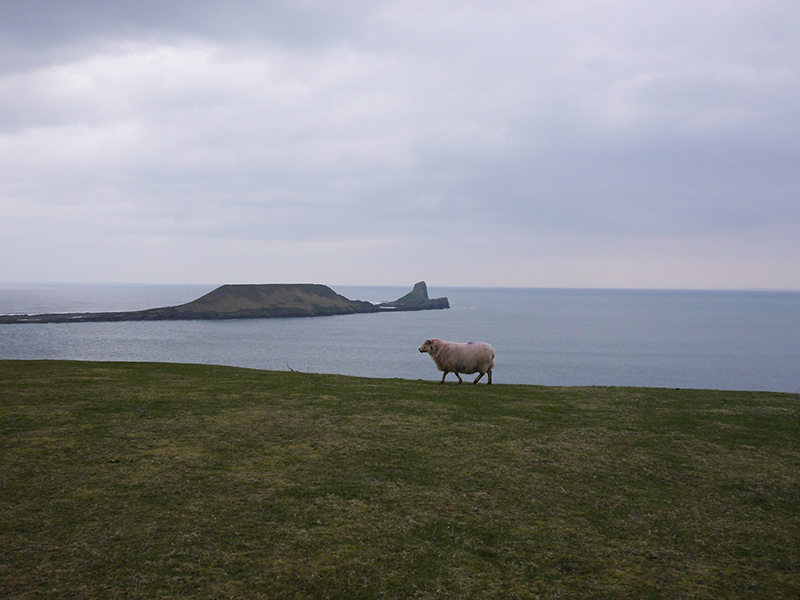 Worm's Head, Gower, Wales