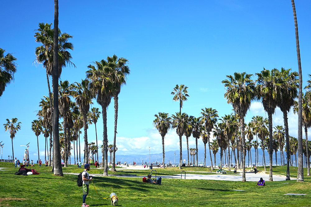Venice Beach Los Angeles Things to Do
