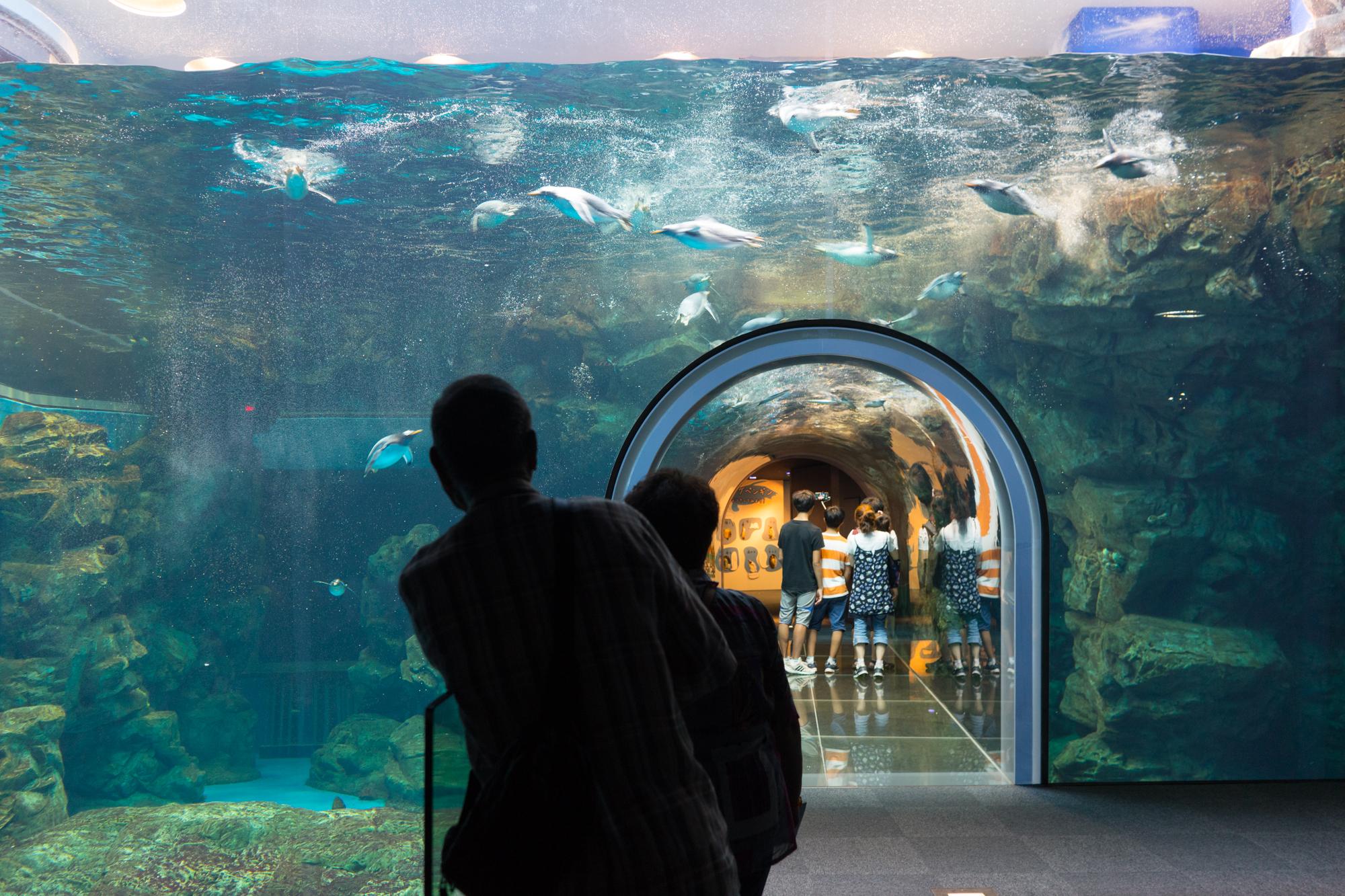 Kaikyokan Aquarium, Shimonoseki, Japan