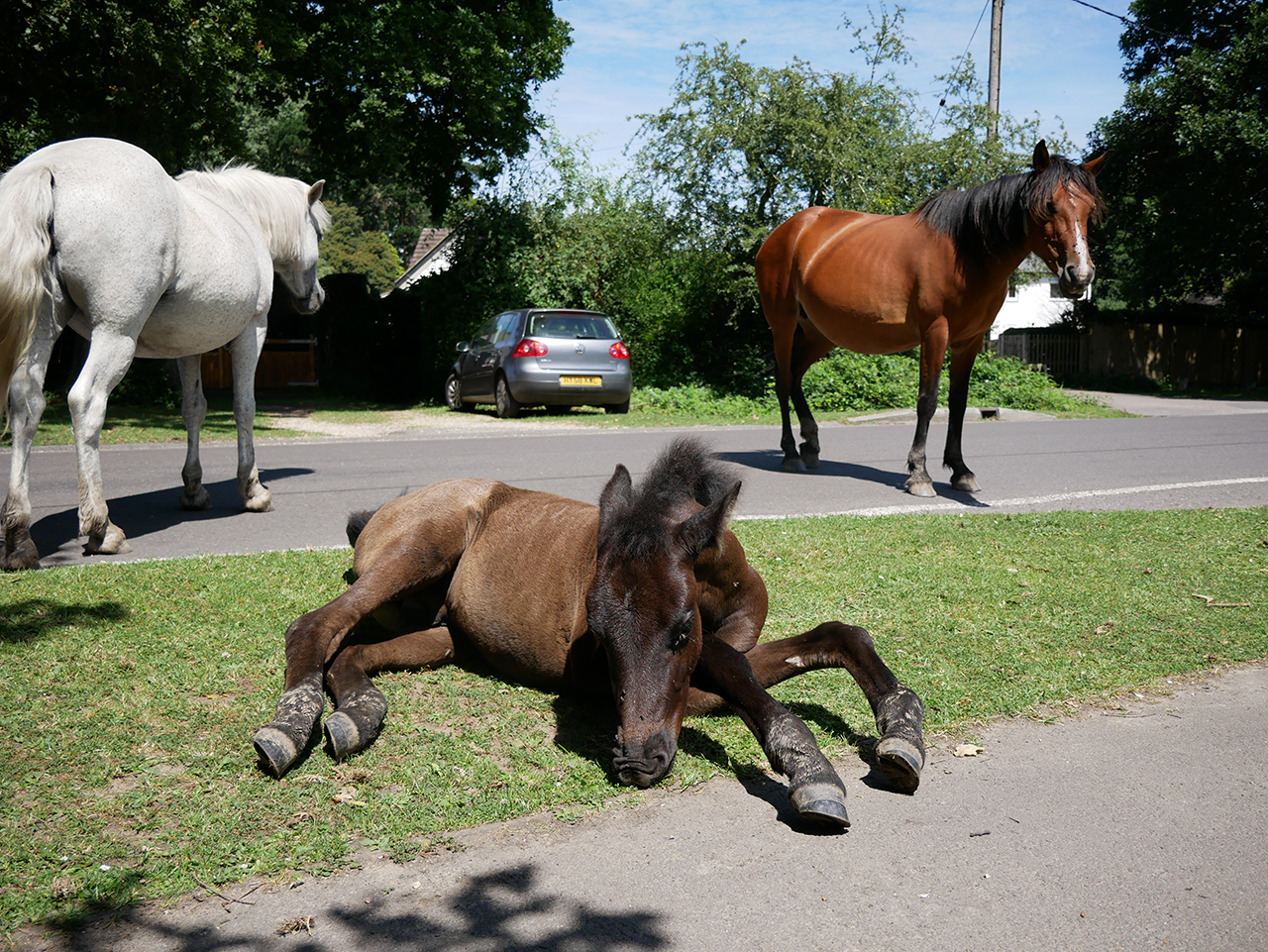 Horses in New Forest, Hampshire