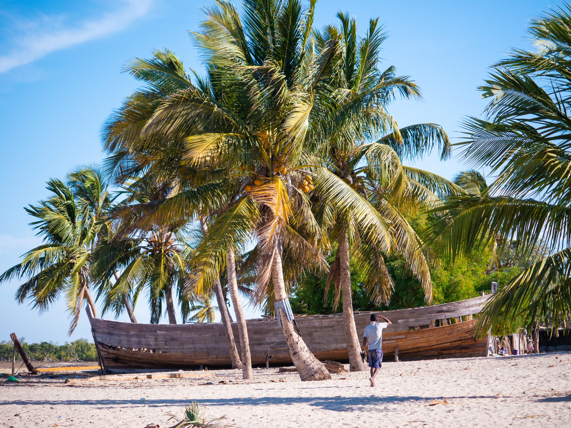 Palm trees on beach in Betany, Morondava