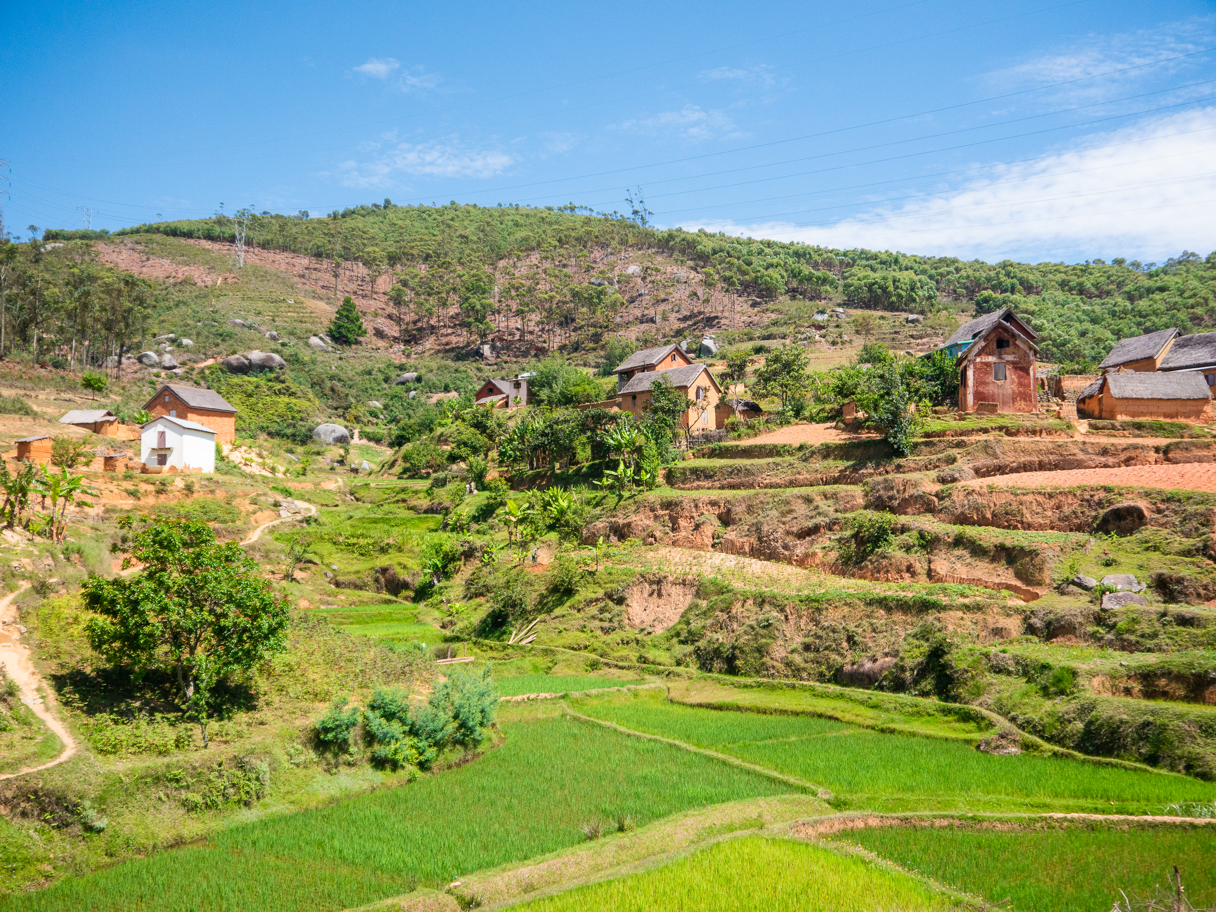Green landscape and rice fields in Madagascar